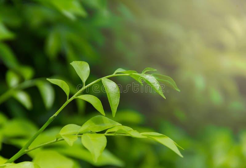 grön bladnatur i trädgården royaltyfria bilder