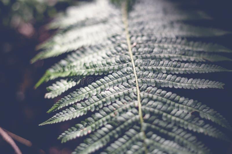 Grön bladormbunke, abstrakt naturlig bakgrund och textur i mörker royaltyfria foton