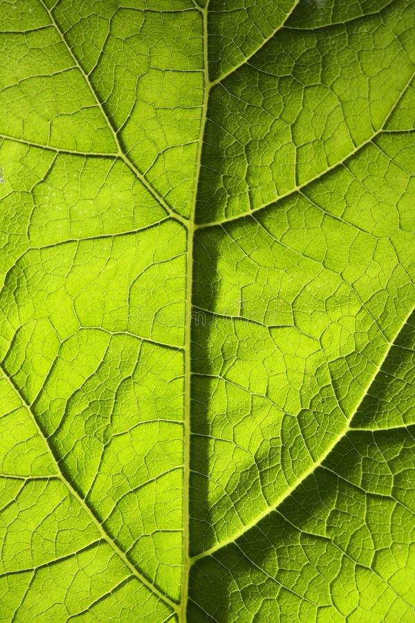 Grön bladtextur arkivbilder