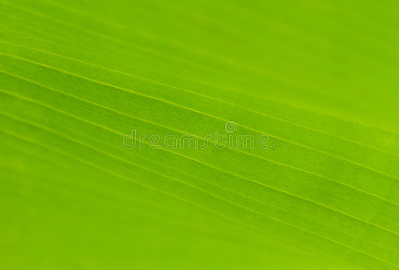 Grön bladtextur i mjuk fokus royaltyfri fotografi