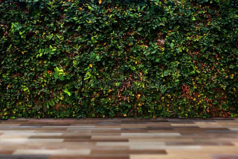 Grön bladvägg med trägolvet royaltyfria foton