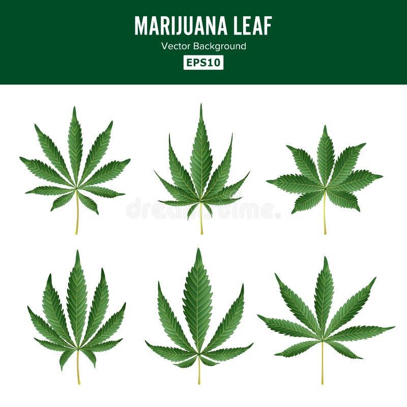 Grön bladvektor för marijuana Medicinsk örtsamling Sativa cannabis eller Indica illustration för cannabis som isoleras på stock illustrationer