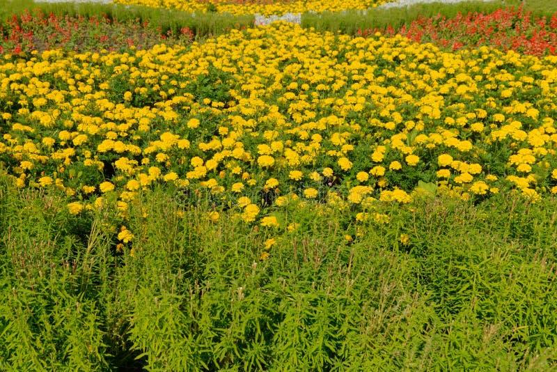 Grön blomsterrabatt som planteras med blommor arkivfoto