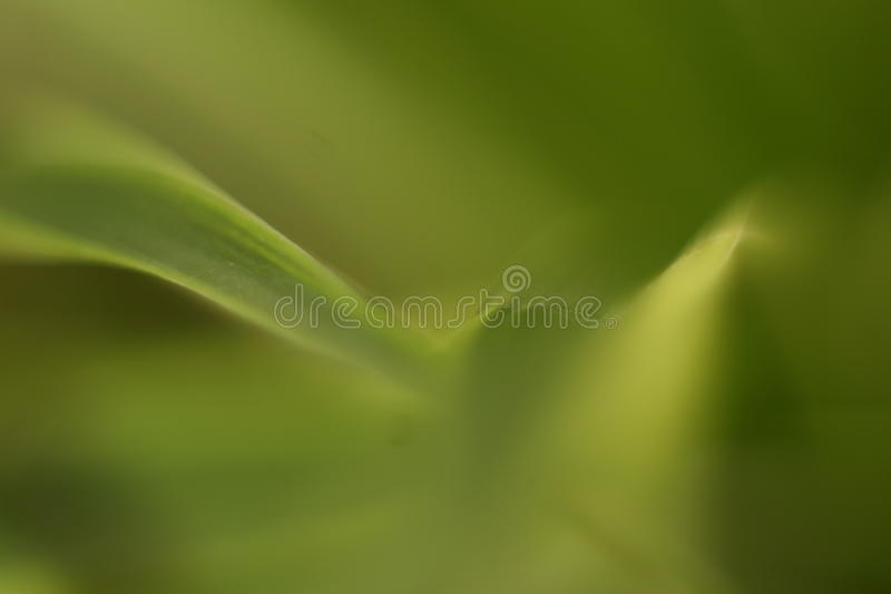 Grön bokeh 3 arkivfoton