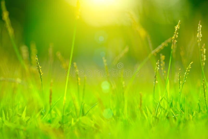 Grön bokehabstrakt begreppbakgrund från naturen arkivbild