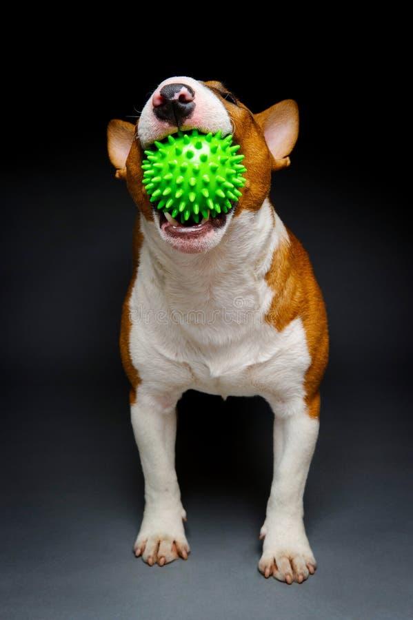 Grön bollhund arkivbilder