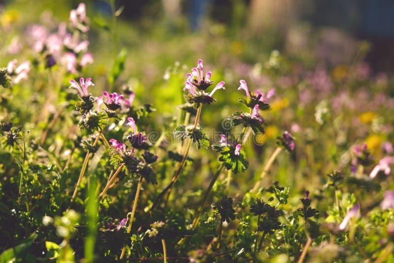 Grön bräkenväxtbakgrund, närbild fotografering för bildbyråer