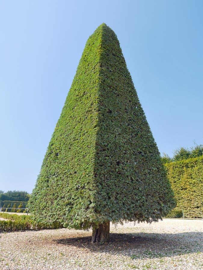Grön buske royaltyfria bilder
