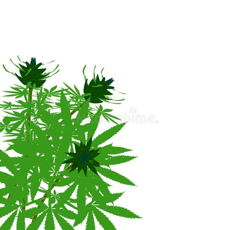 Download Grön buske av hampa vektor illustrationer. Illustration av leaf - 76702413