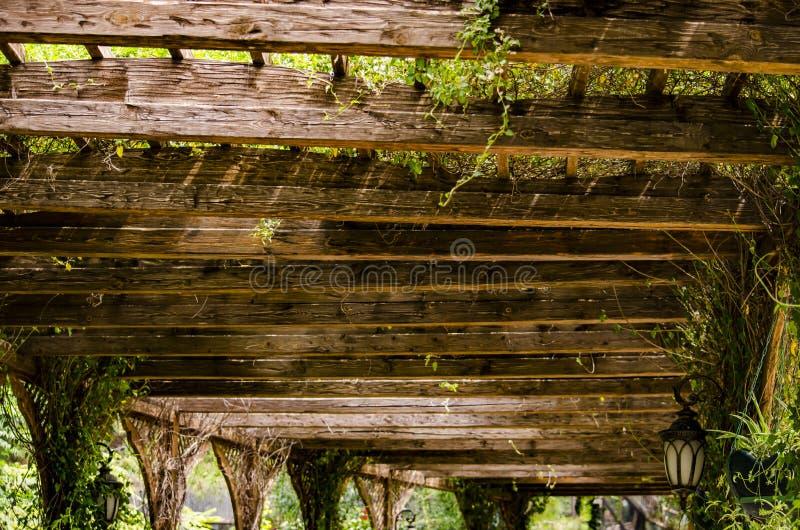 Grön canopy arkivfoton
