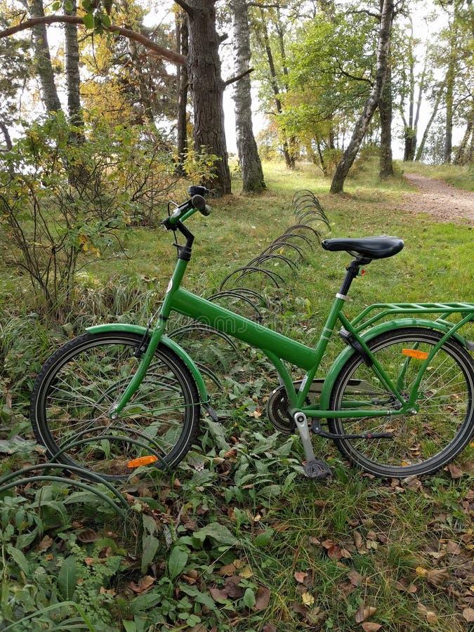 Grön cykel som vilar i finlandssvensk skog arkivbild