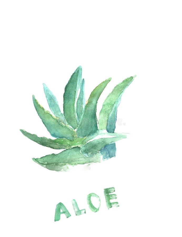 Grön dragen målarfärg för blått hand av aloe vera Tequilavattenfärgillustration Medicinsk färgväxt vektor illustrationer