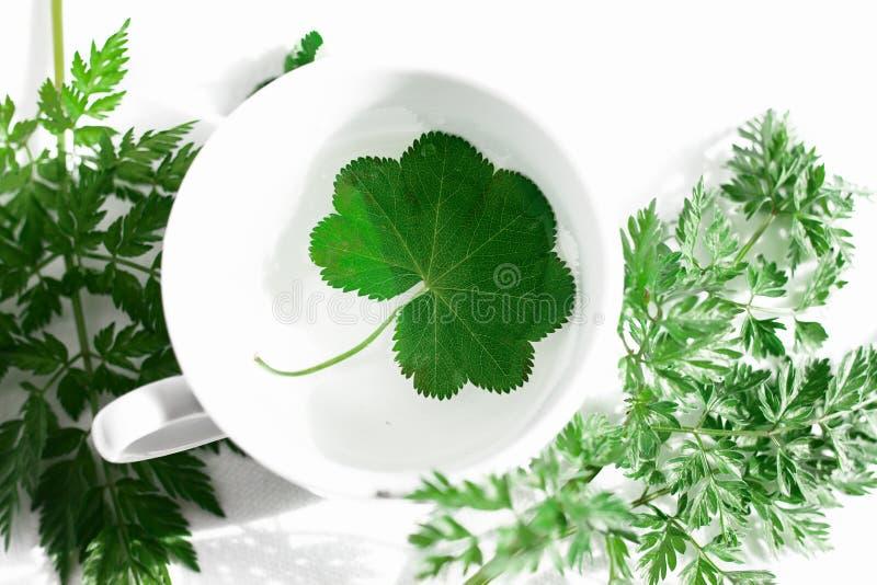 Grön eco för gräs arkivfoton