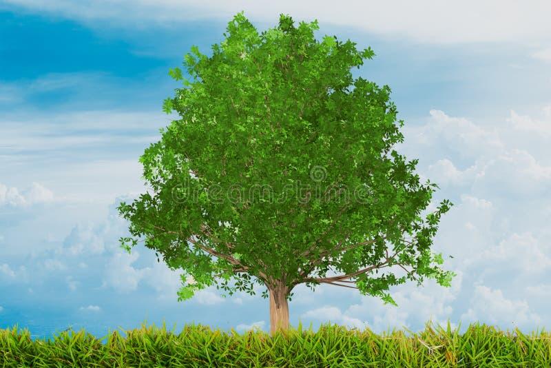 Grön ek med gräs vektor illustrationer