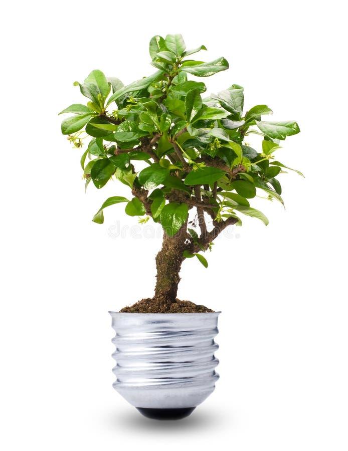 Grön energi royaltyfri foto