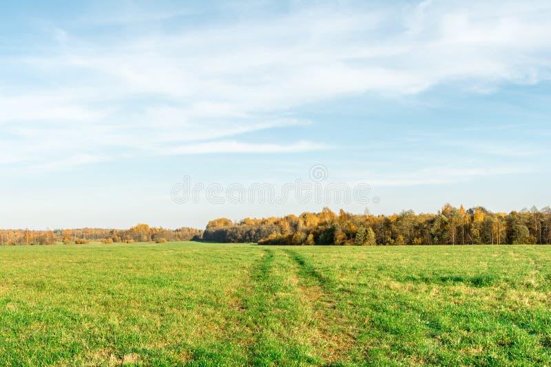 Grön fält- och höstskog, höstlandskapbakgrund arkivfoton