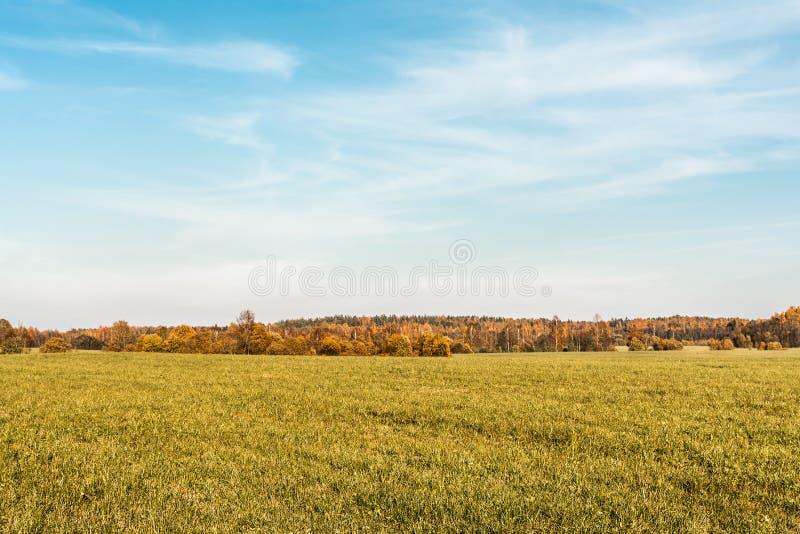 Grön fält- och höstskog, höstlandskapbakgrund royaltyfri fotografi