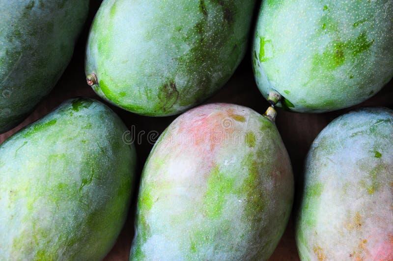 Grön färsk Mango royaltyfri bild