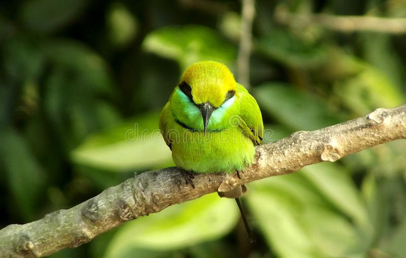 grön fågel bland grönskan royaltyfri fotografi