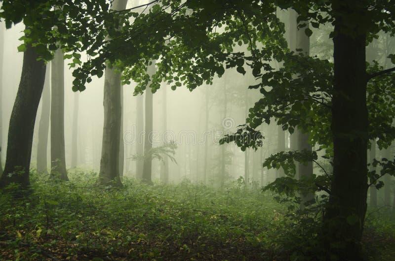 Grön fantasiskog med dimma arkivfoton