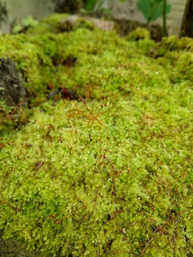 Grön fern fotografering för bildbyråer