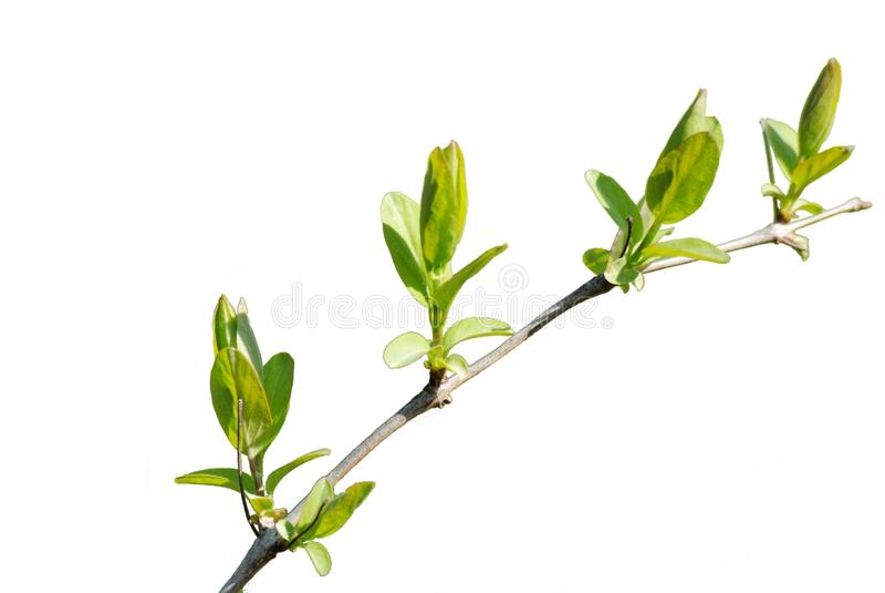 Grön filial arkivfoto