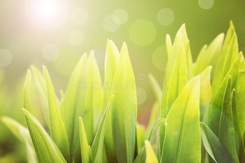 grön fjäder för gräs royaltyfri bild