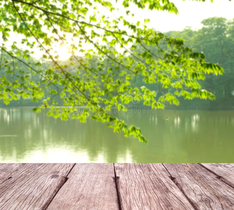 Grön fjäderbakgrund royaltyfri fotografi