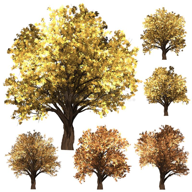 Grön Forrest trädbakgrund fastställt illustrationträd vit isolat f?r bakgrund fotografering för bildbyråer