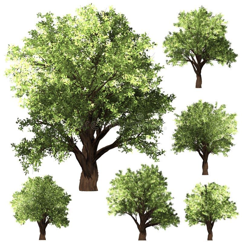 Grön Forrest trädbakgrund Vit isolatbakgrund och psdmapp för valda lager royaltyfri illustrationer