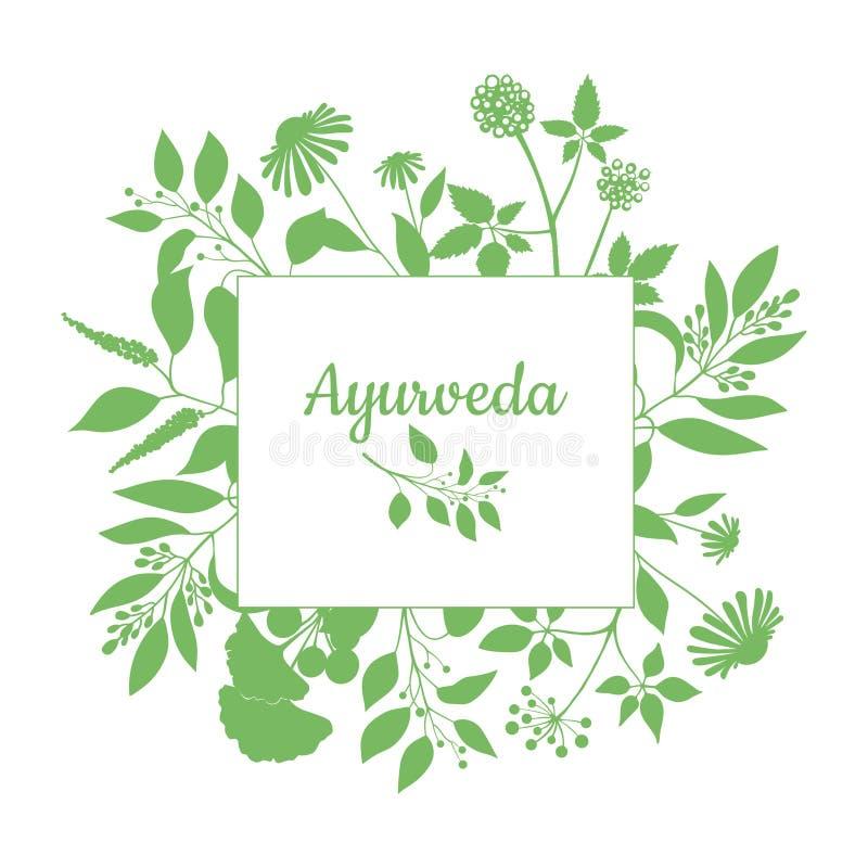 Grön fyrkantig ram med samlingen av ayurvedaväxter Kontur av filialer på vit bakgrund stock illustrationer