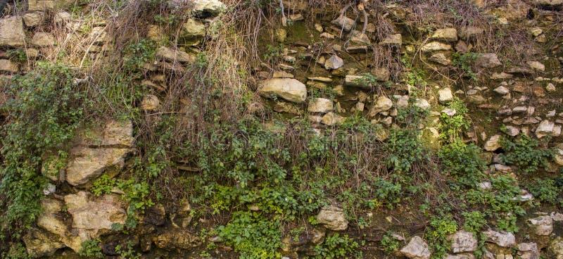 grön gammal vägg Texturen av stenarna som gräset växer på royaltyfria bilder