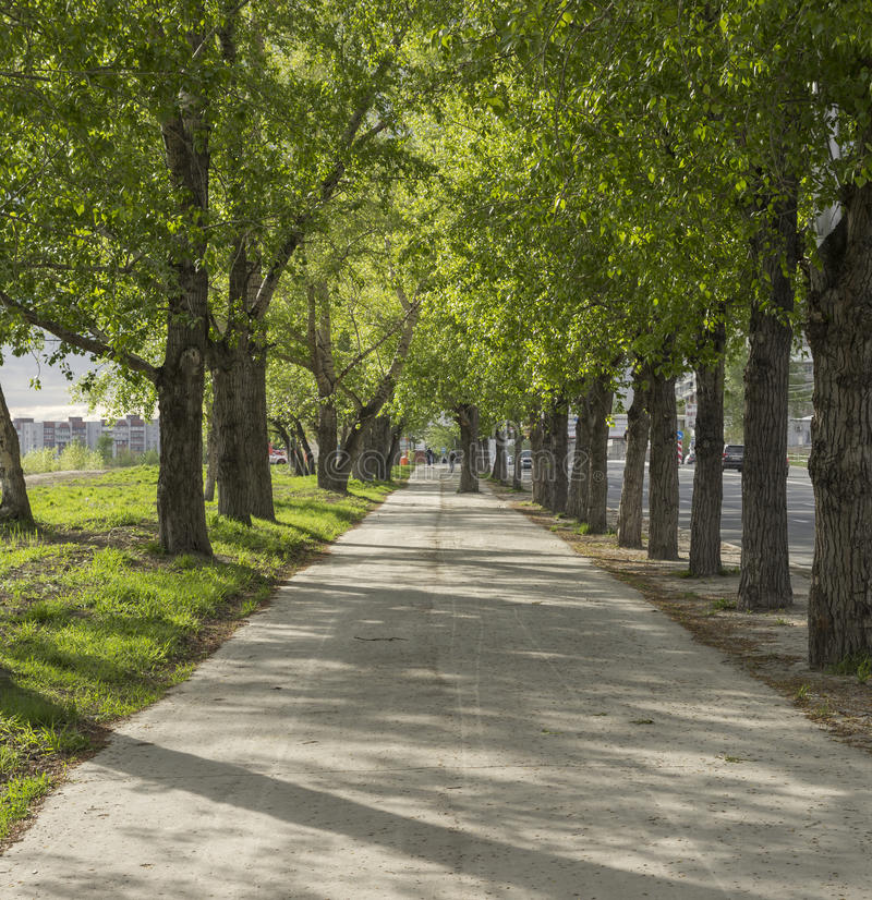 Grön gränd i Novosibirsk royaltyfri bild
