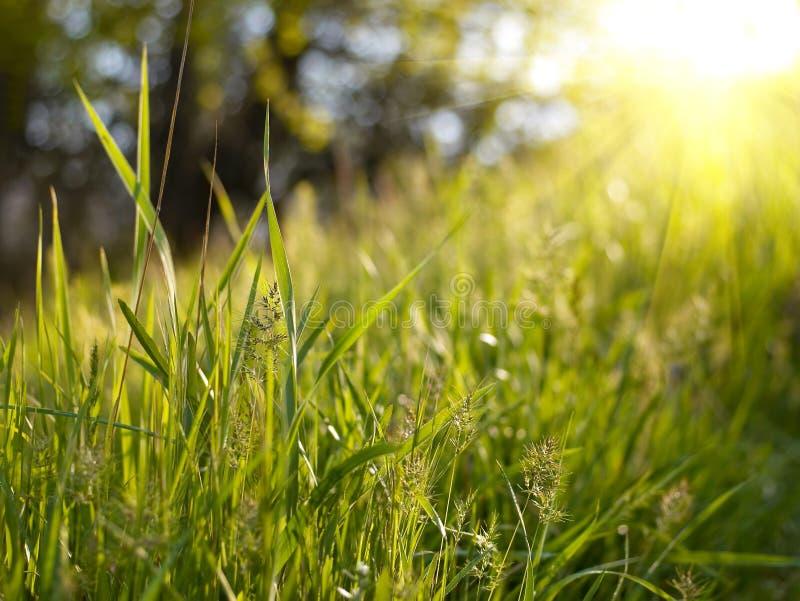 Grön gräsäng arkivbilder