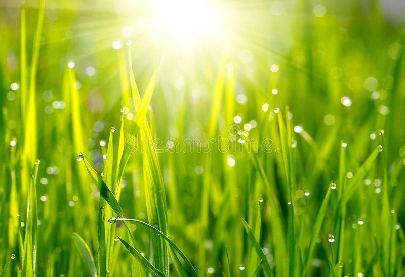 Grön gräsäng arkivfoton