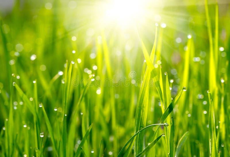 Grön gräsäng royaltyfri bild