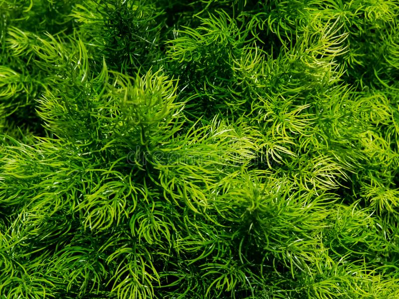 Grön gräs- bakgrund av någon dekorativ växt arkivfoto