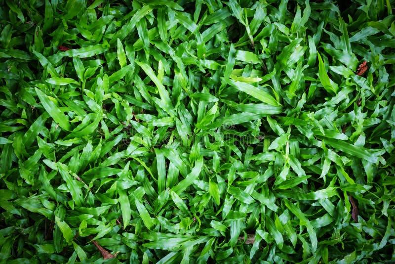 Download Grön gräsbakgrund arkivfoto. Bild av naturligt, miljö - 78725038