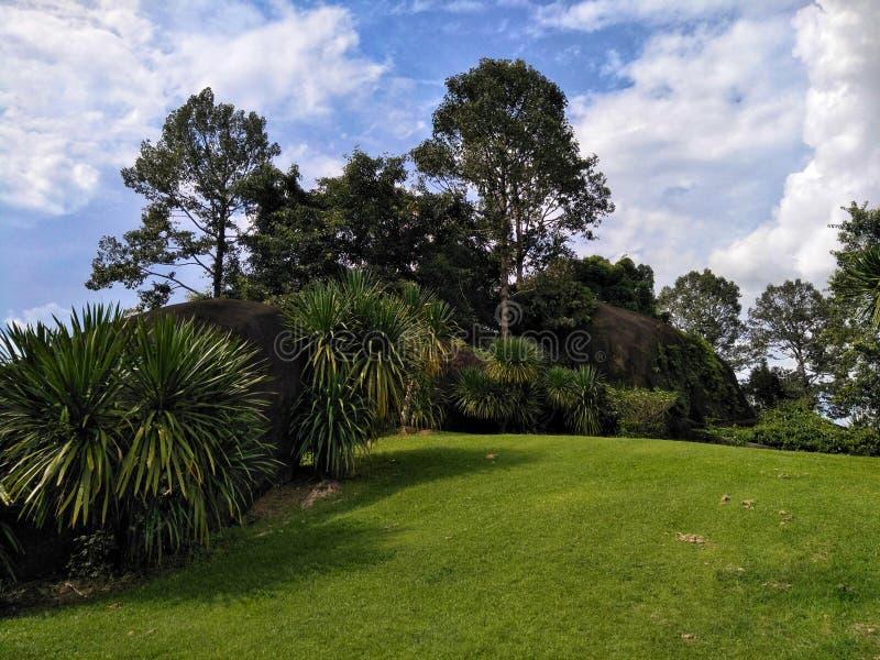 Grön gräsmatta och palmträd med himlen royaltyfri foto