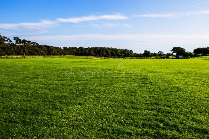 Grön gräsmatta på det Margam landet parkerar jordning, val royaltyfri fotografi