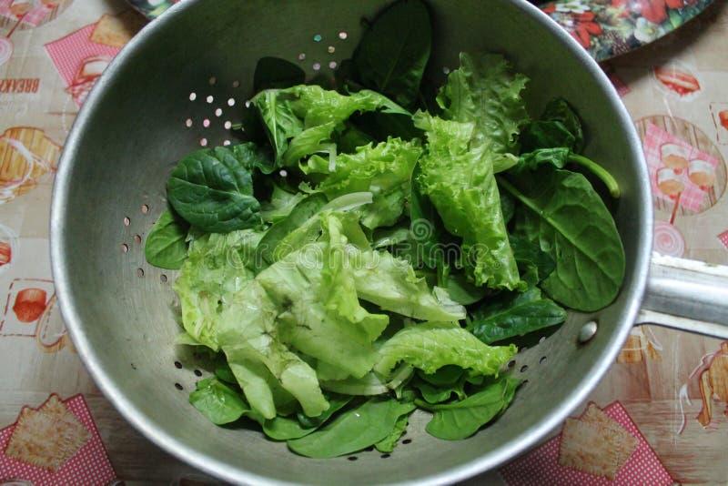 grön grönsallat arkivfoton