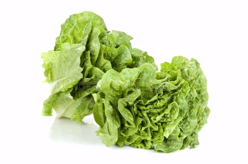 grön grönsallatsallad arkivfoto