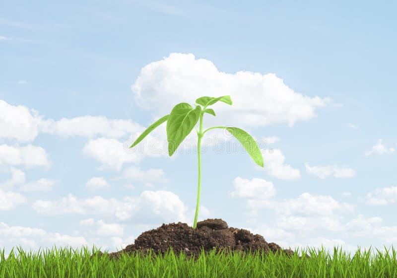 Grön grodd som växer från jordningen Begreppsbörjan av något som är ny royaltyfria foton