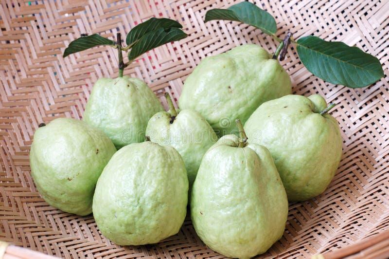 grön guava royaltyfri bild