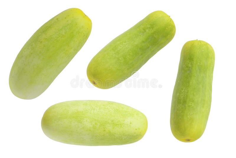 Grön gurka isolerad bakgrund royaltyfria foton