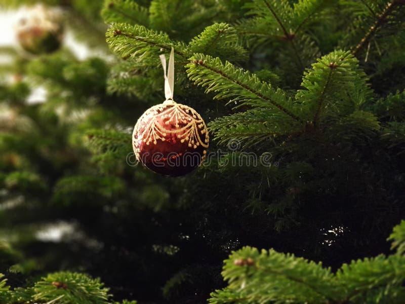 Grön härlig julgran med en härlig burgundy julboll royaltyfria foton