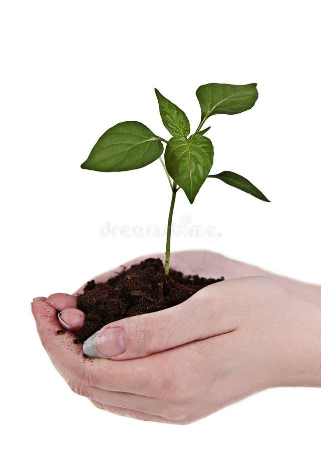 grön handväxt arkivfoto