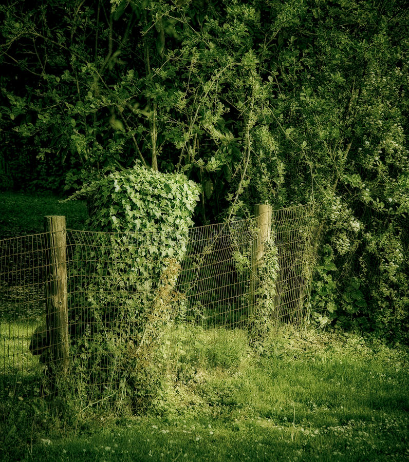 grön hedgerow arkivbild