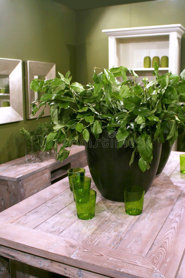 grön inre växt arkivbild