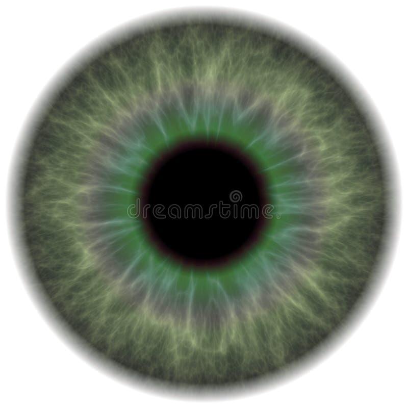 grön iris för öga vektor illustrationer